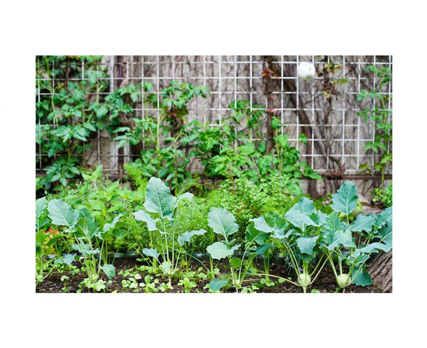 Voll bepflanztes Gemüsebeet